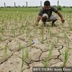 A farmer removes dried plants from his parched paddy field at Narimanpura village, on the outskirts of the western Indian city of Ahmedabad July 30, 2012. Rice is the main summer-sown crop in the country and sowing is over in 14.46 million hectares compared to 16.13 million hectares a year earlier. REUTERS/Amit Dave (INDIA - Tags: AGRICULTURE BUSINESS SOCIETY FOOD EMPLOYMENT) - RTR35N1N