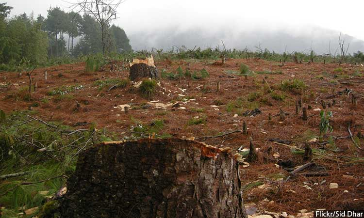 Deforestation_750